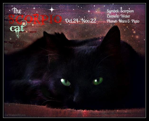 Scorpio cat astrology zodiac