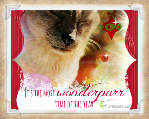 Wonderpurr holiday cat