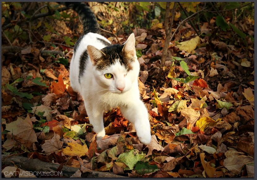 autumn leaves cat