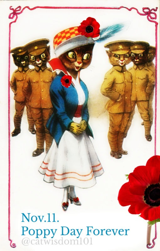 remembrance_day_cat_poppy