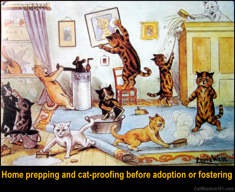 cat-proofing before adoption