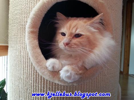 swedish animal wefare laws- charlie rascal cat