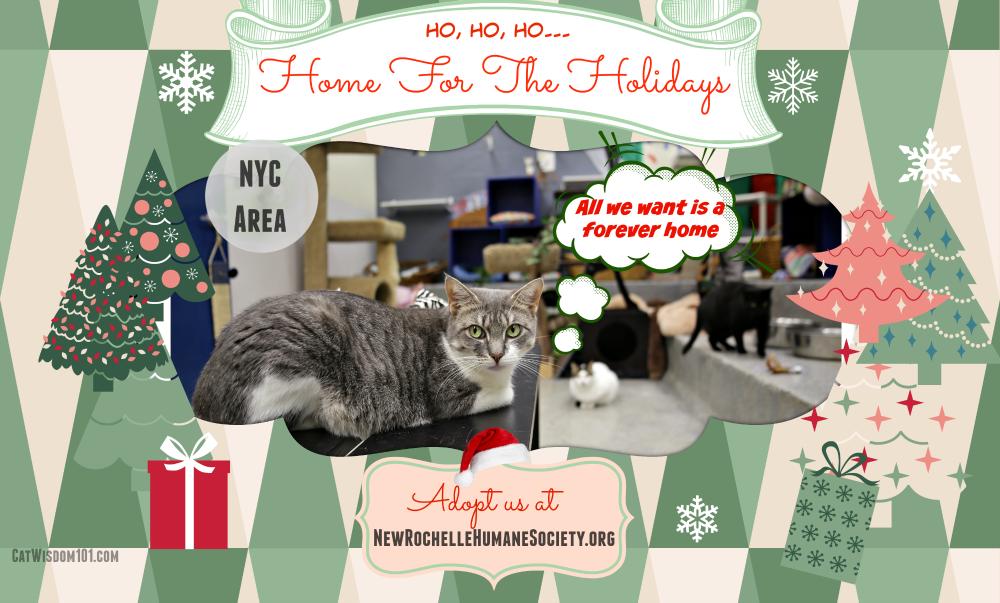 NRHS-cat adoption-holidays