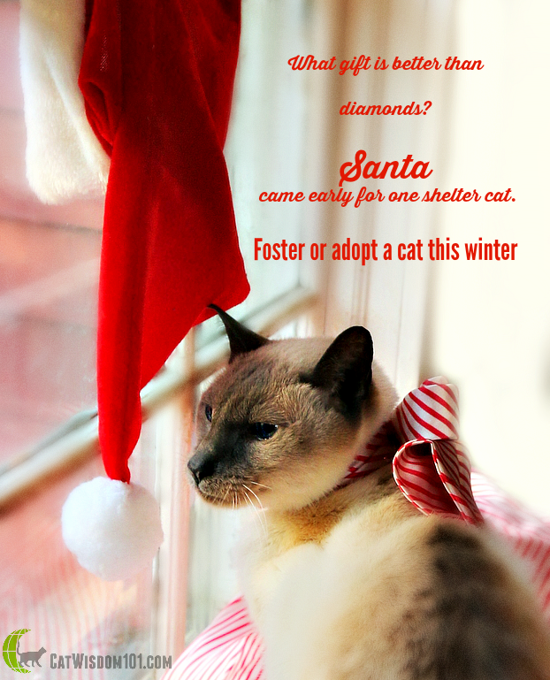 Santa hat adopt a shelter cat