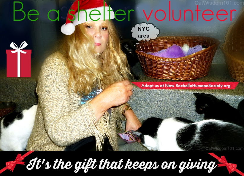 helter volunteer quote-new rochelle humane society
