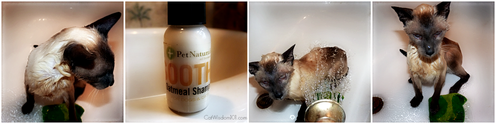 cat bathing-pet naturals shampoo