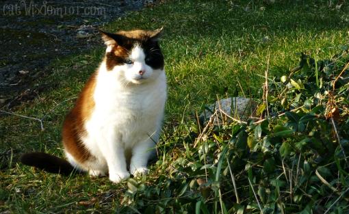 Domino-cat- January
