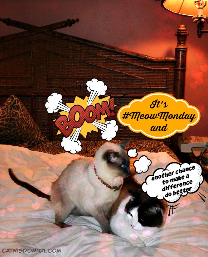 #MeowMonday: Nominate Cat Wisdom 101 For A Nose-to-Nose Award
