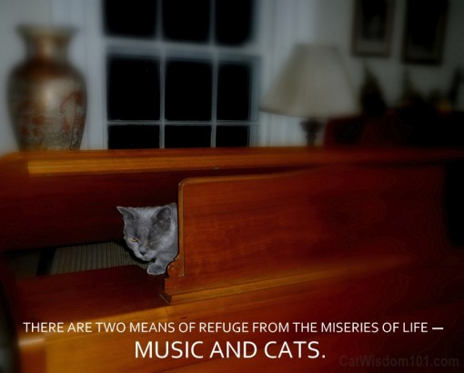 QUOTE CATS MUSIC
