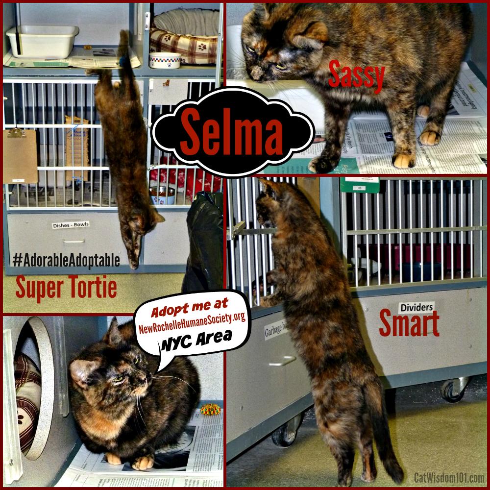 Selma-shelter cat adoption #adorableadoptable