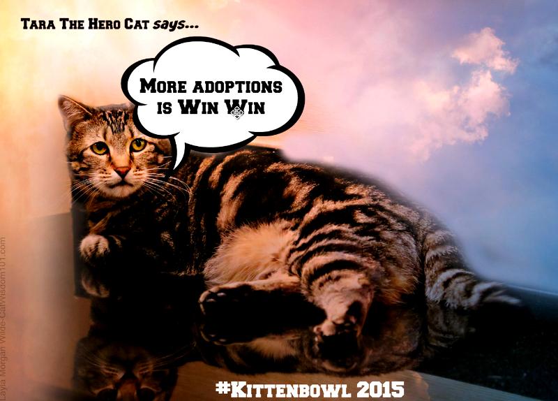 ara the hero cat- Kitten bowl 2015