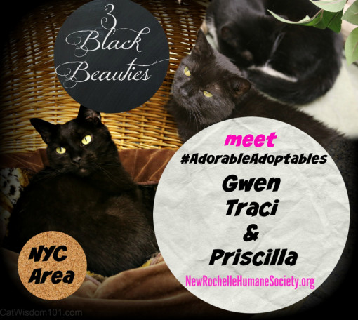 #adorableadoptables black cats