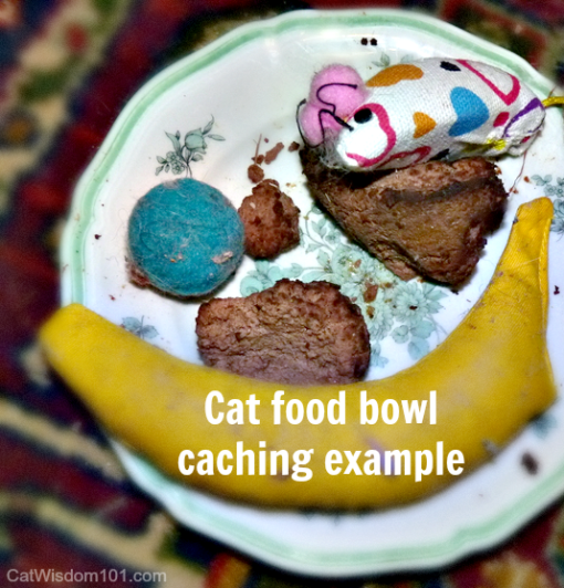 cat caching food