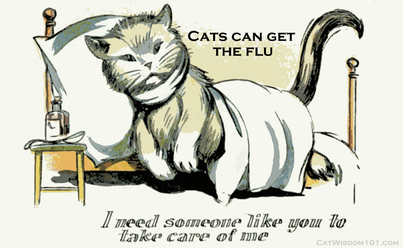 cats can get the flu-vintage ill cat
