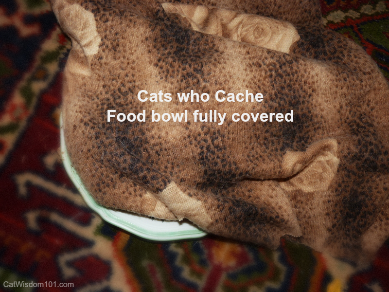 cats who cache their food