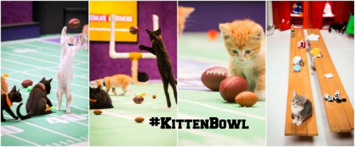 #kittenbowl 2015