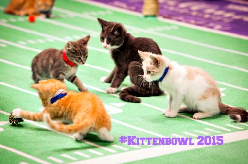 #kittenbowl 2015 Hallmark
