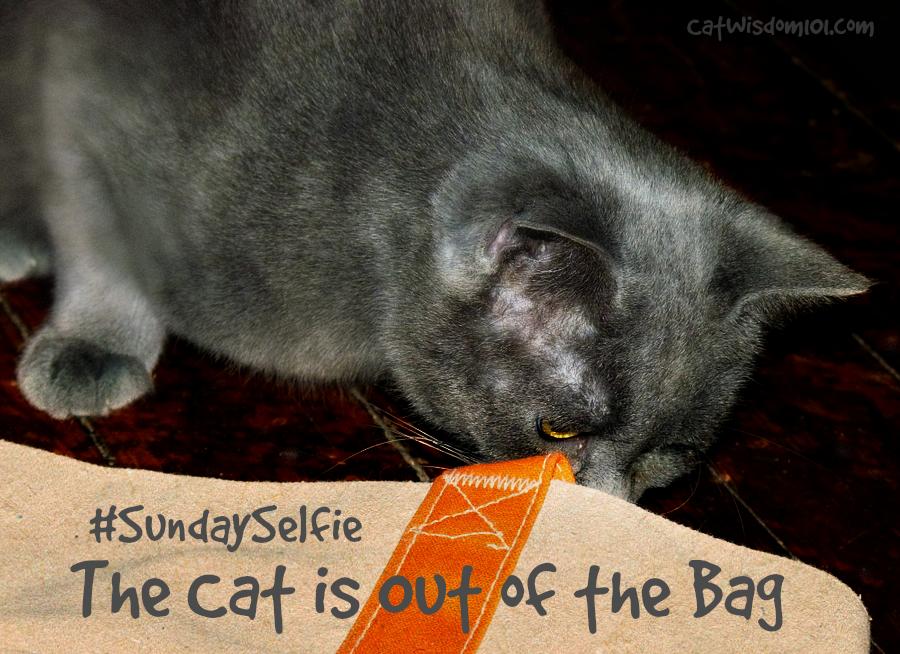 #selfiesunday nu nu cat