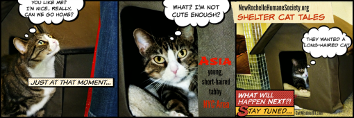 shelter cat tales
