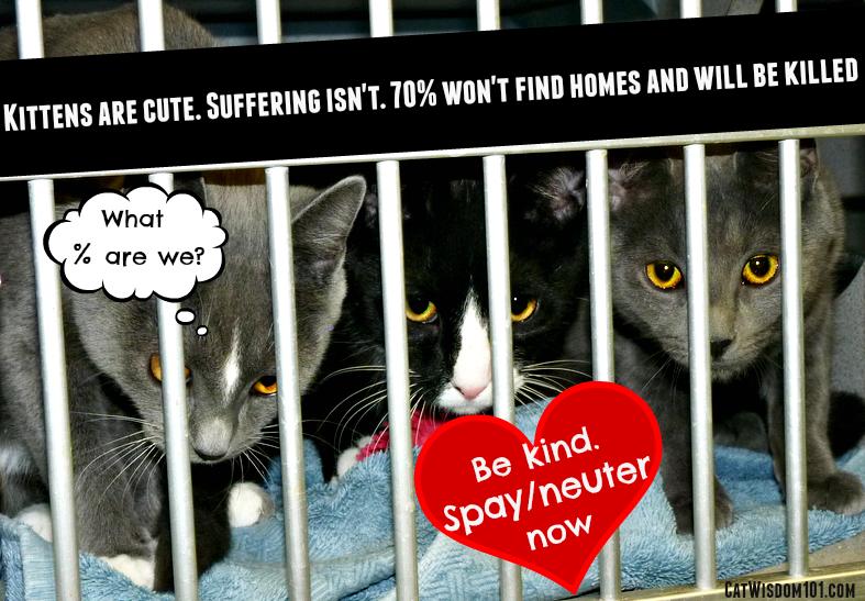 Beat the heat-kitten season-new rochelle humane society