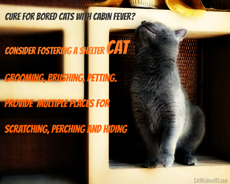 Cabin fever cures for cats