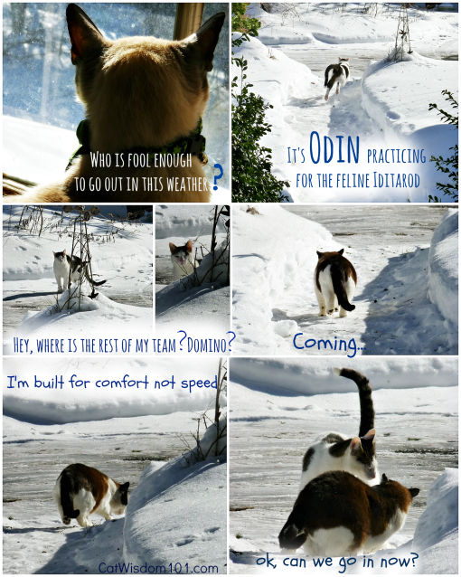 funny Cats in snow winter
