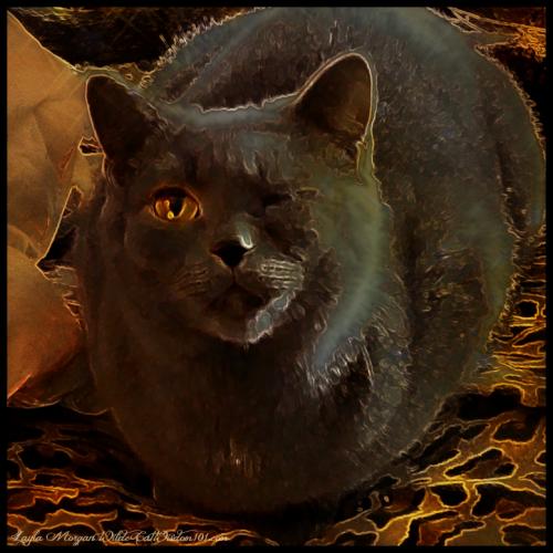 Cat oscars art