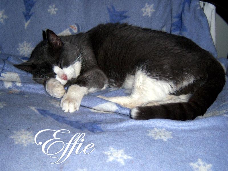 Effie former feral cat