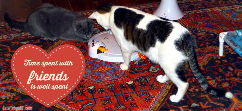Frolicat pounce cats playing-valentine