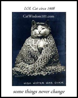 LOL cat winter vintage