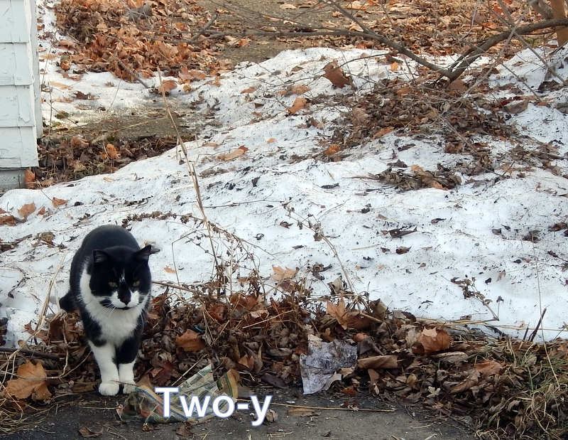 Two-y feral cat