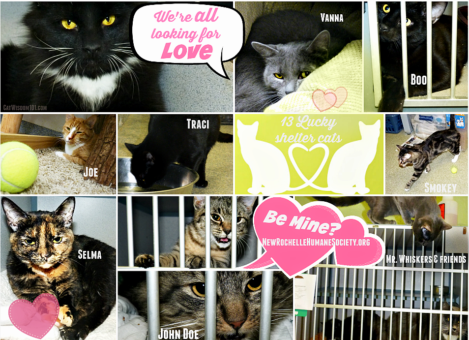 Valentine-friday the 13th- shelter cats love