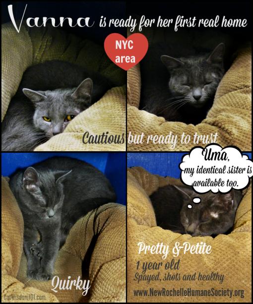 Vanna_shelter_cat