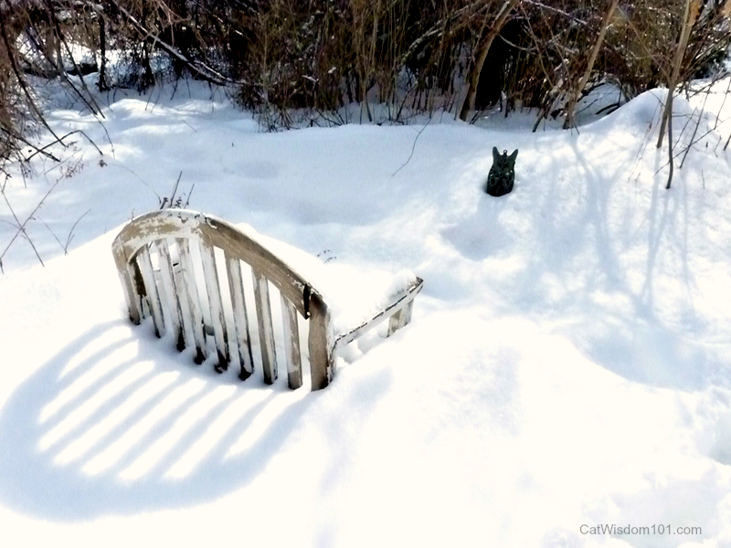 cat grave site snow