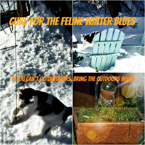 cure feline winter blues