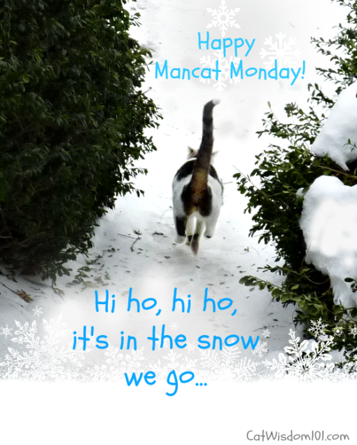 mancat-monday-snow-cat-510x635 Caturday: Welcome to my bedroom, G+ Hangouts & News