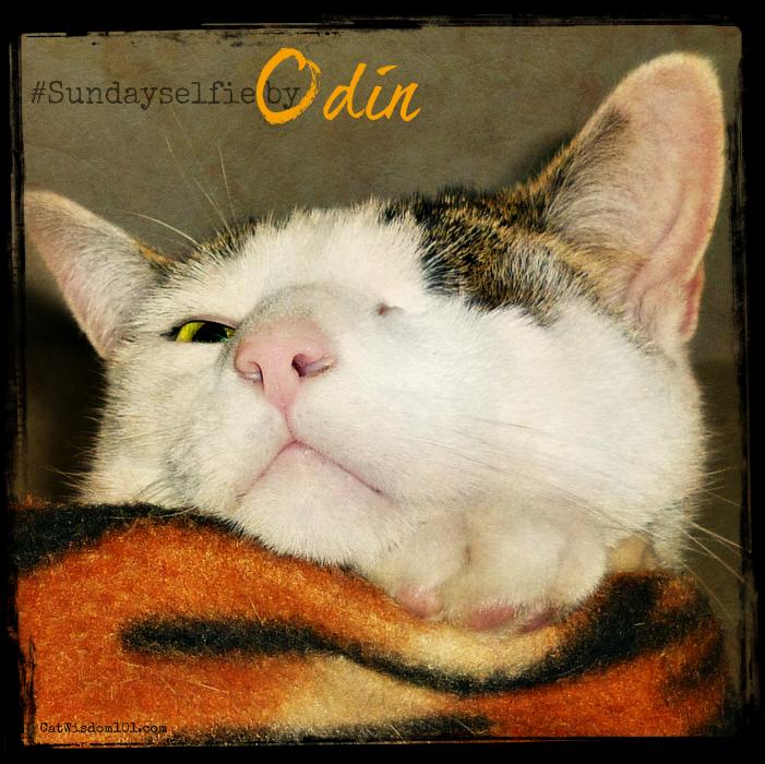 #sundayselfie Odin cat