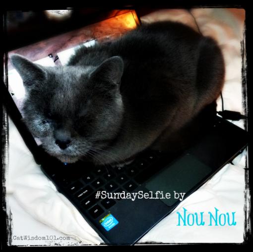 #sundayselfie cats Nou Nou