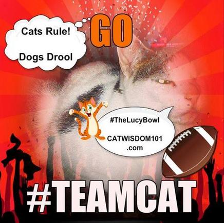 #teamcat #kittenbowl