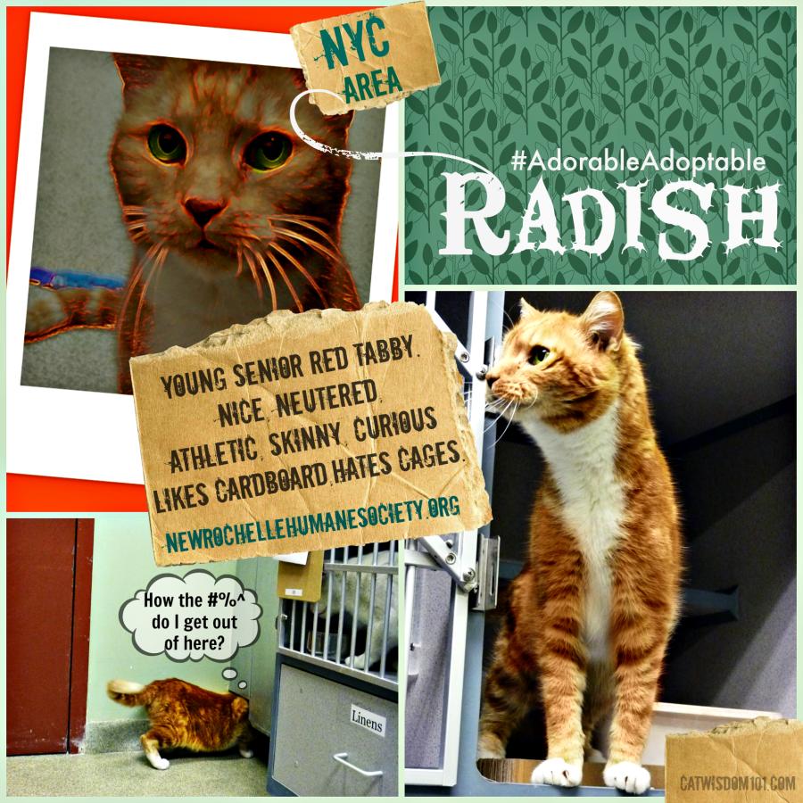 Radish shelter cat