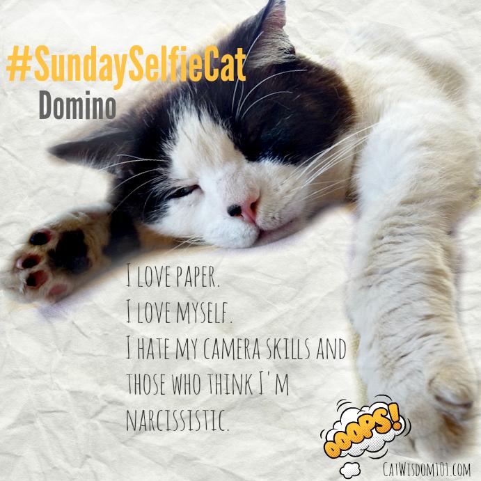#Sundayselfiecat narcissist cat