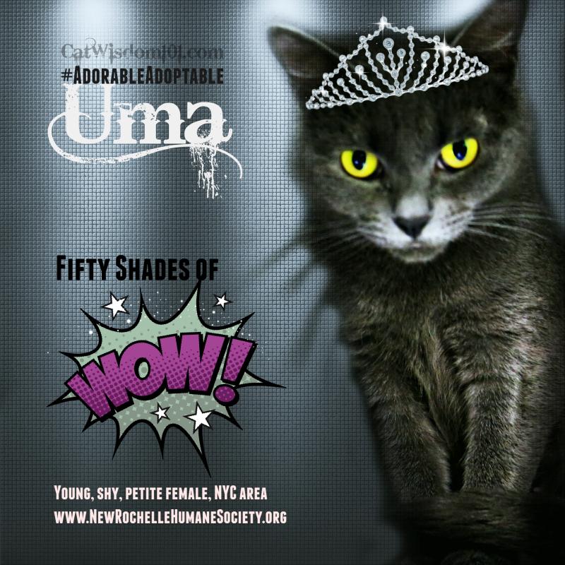 Uma shelter cat-50 shades of grey