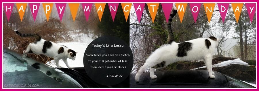 mONCAT-MONDAY-FELINE-LIFE-LESSONS