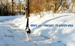odin's farewell winter walk