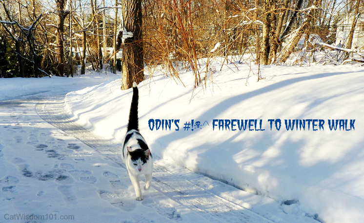 odin's farewell winter walk
