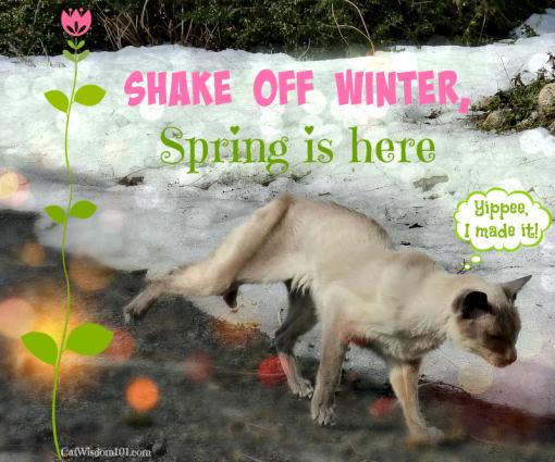 spring happy dance cats