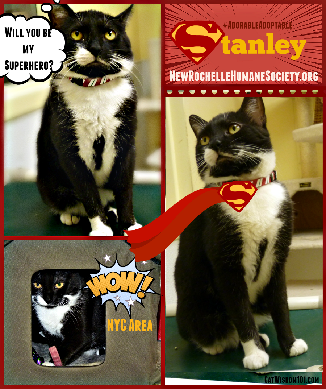 Stanley shelter cat