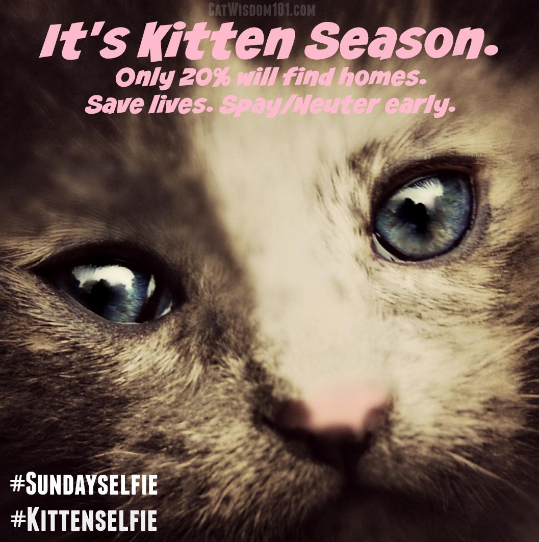 kitten season #kittenselfie