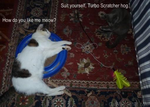 Cats turbo scratcher