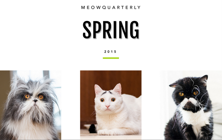 An Extra Purrfect Caturday With Meow Quarterly